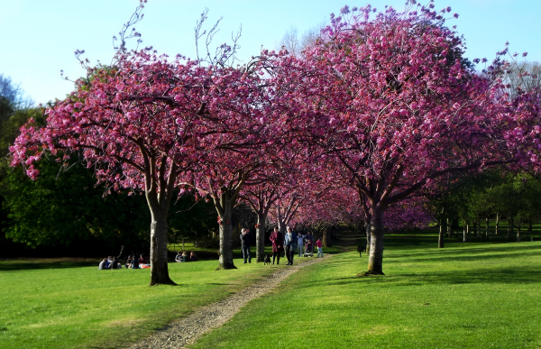 blooming trees in victoria park bath