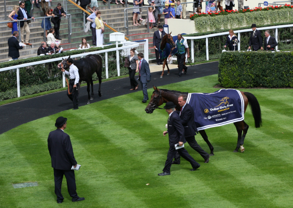 Ascor Shergar Cup Parade Ring 2