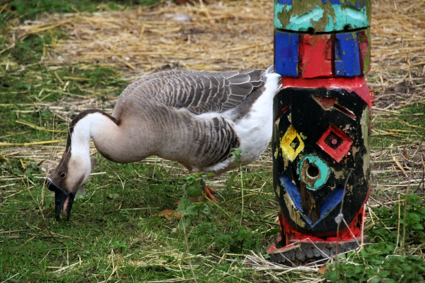 Windmill Hill City Farm Bristol Goose and Totem Pole