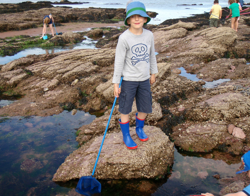 things to do with kids in south devon rock pooling crabbing