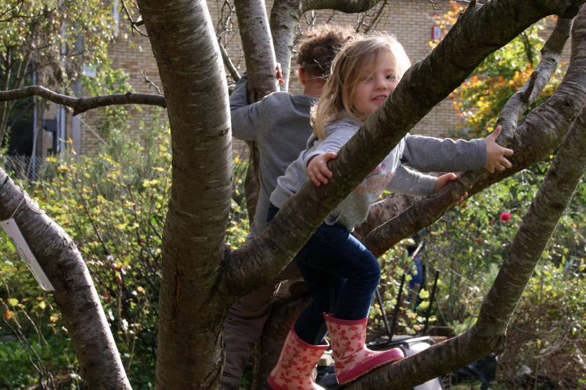 tree climbing at windmill hill city farm