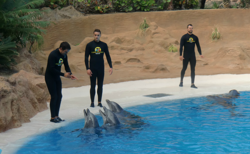 dolphin show at loro parque tenerife, things to do in tenerife