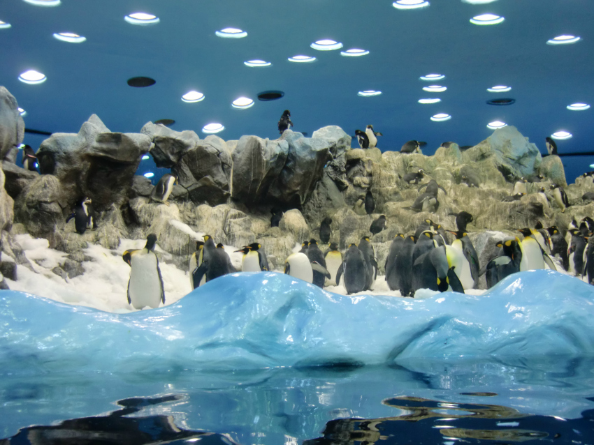 penguins at loro parque in tenerife, things to do in tenerife