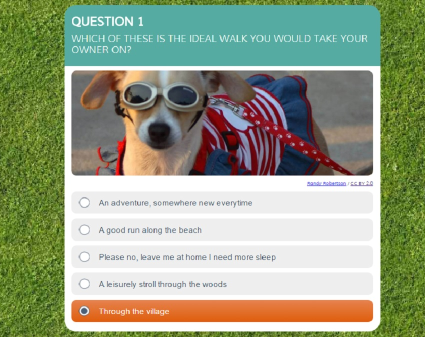 taking your dog on holiday, dog-friendly holidays in the uk