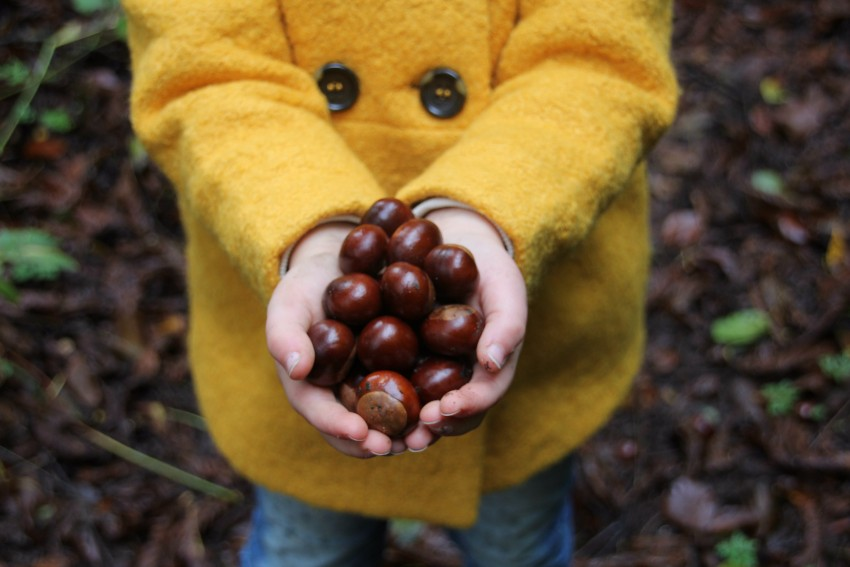 burg schlitz collecting conkers