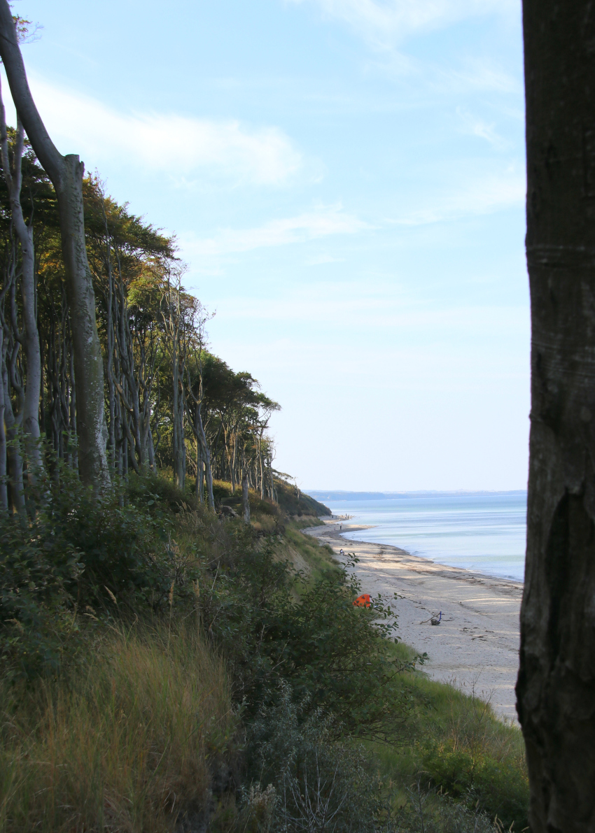 view-over-gespensterwald-nienhagen-and-coastal-path-along-the-baltic-sea