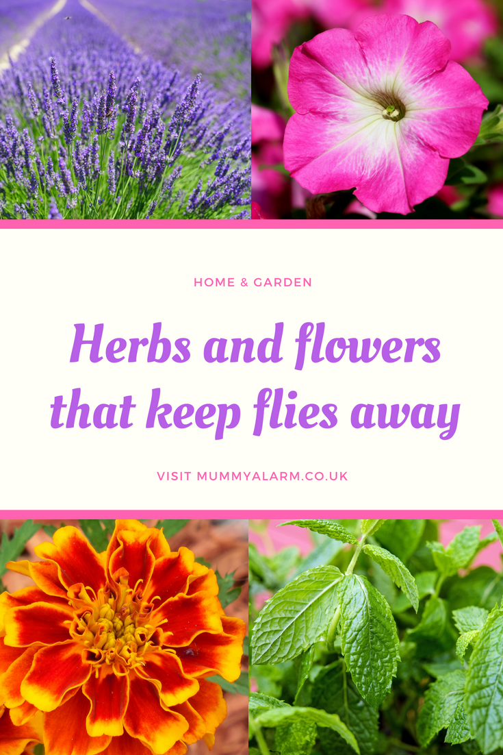 herbs and plants that keep flies away from your garden, backyard or patio